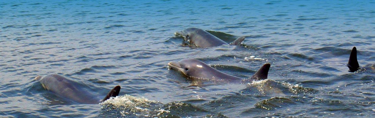 slideshow-dolphins-400